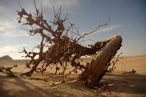 desert02.jpg