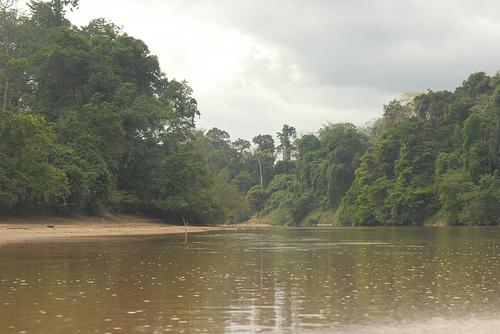 jungle02.jpg